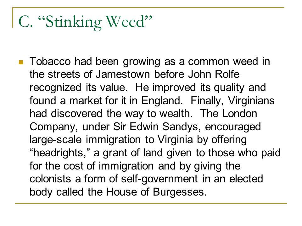 C. Stinking Weed