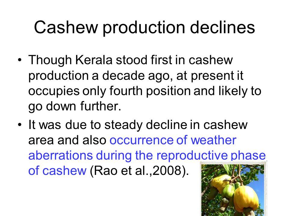 Cashew production declines