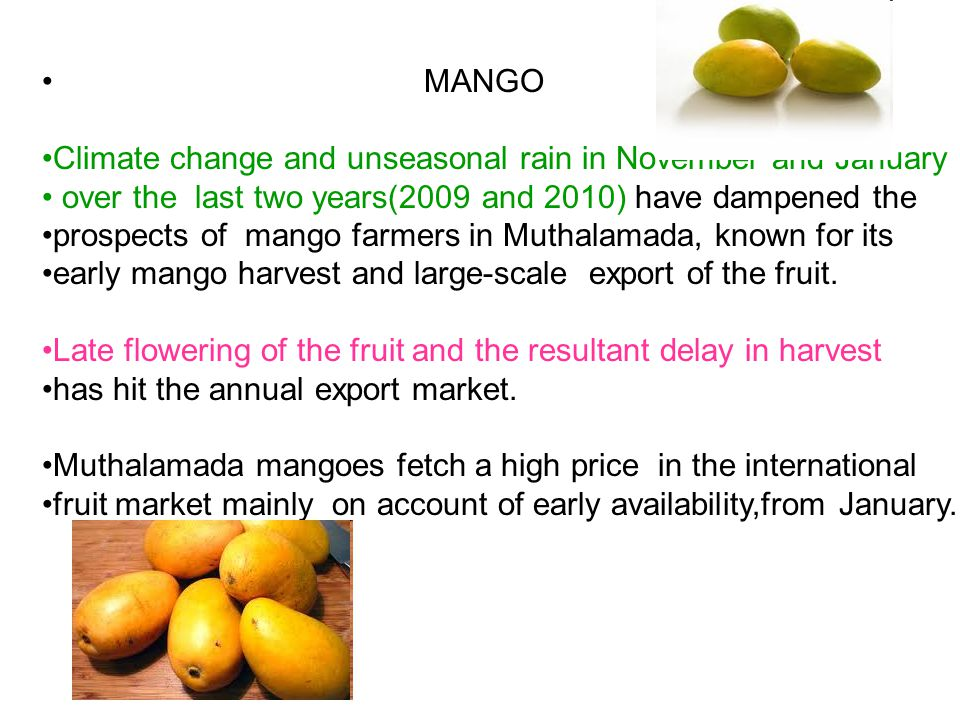 MANGO Climate change and unseasonal rain in November and January. over the last two years(2009 and 2010) have dampened the.