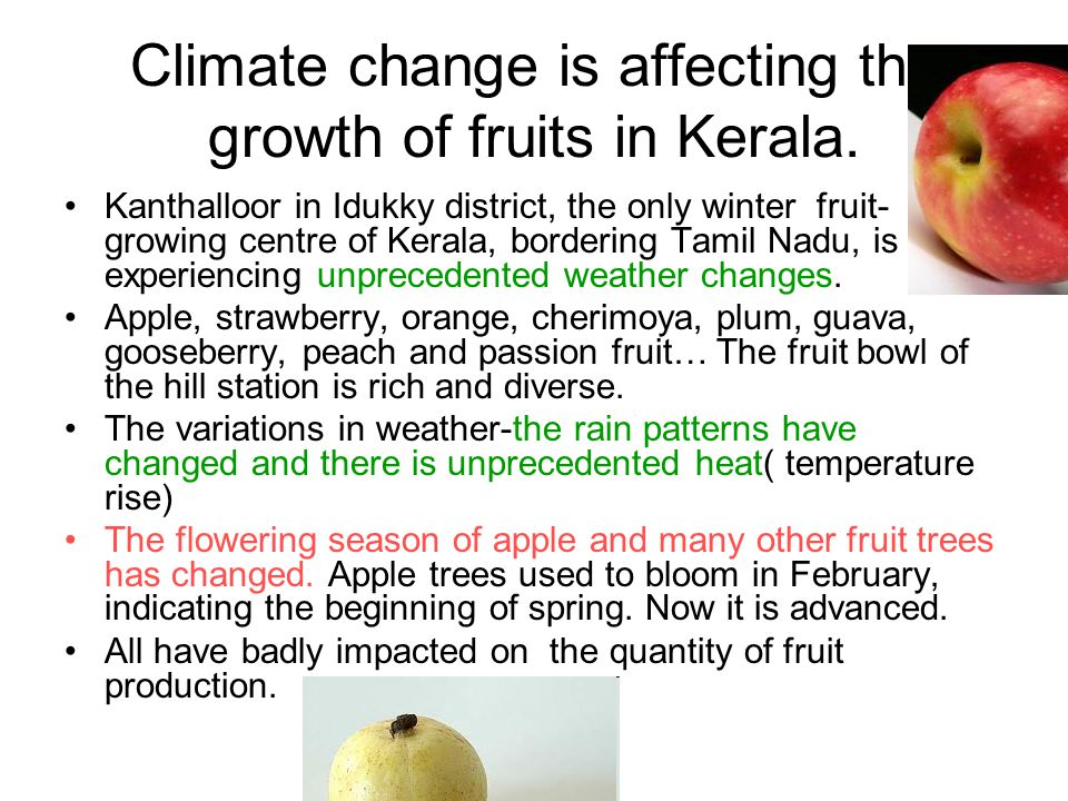 Climate change is affecting the growth of fruits in Kerala.