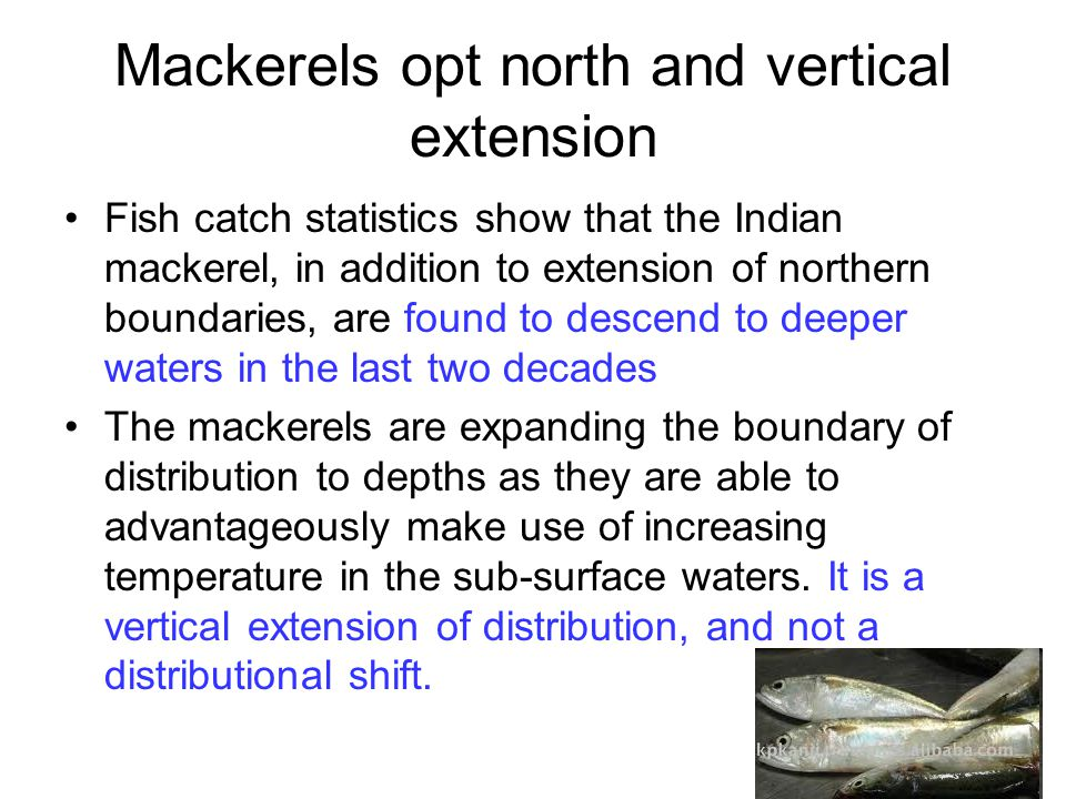 Mackerels opt north and vertical extension