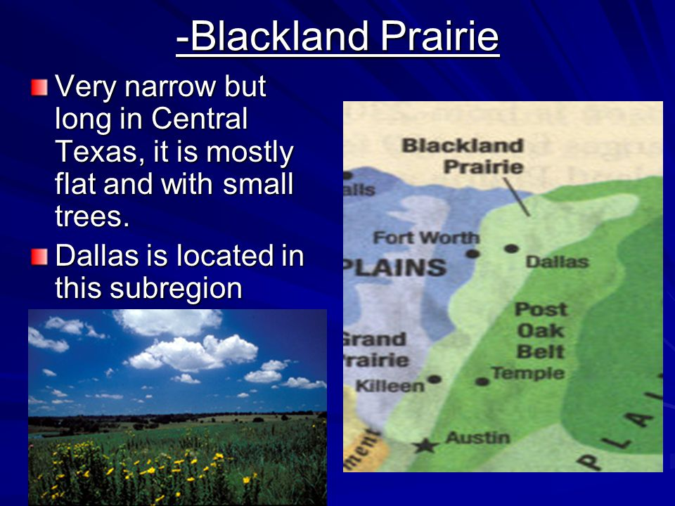 -Blackland Prairie Very narrow but long in Central Texas, it is mostly flat and with small trees.