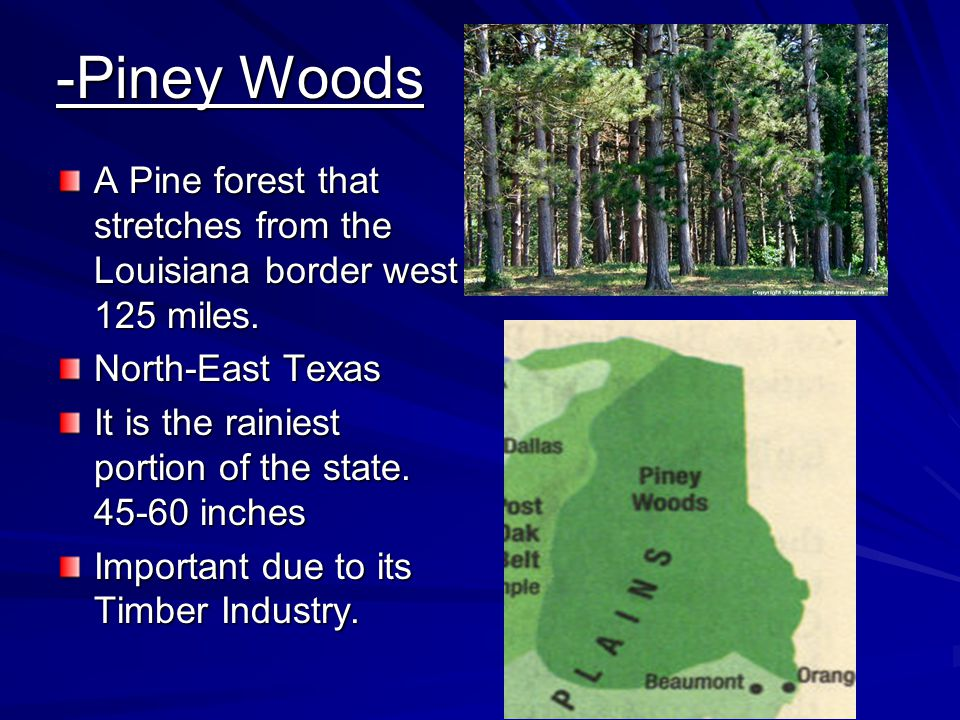 -Piney Woods A Pine forest that stretches from the Louisiana border west 125 miles. North-East Texas.