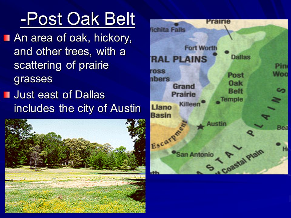 -Post Oak Belt An area of oak, hickory, and other trees, with a scattering of prairie grasses.