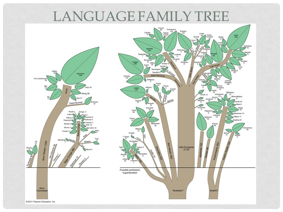 Language Family Tree Figure 5-17
