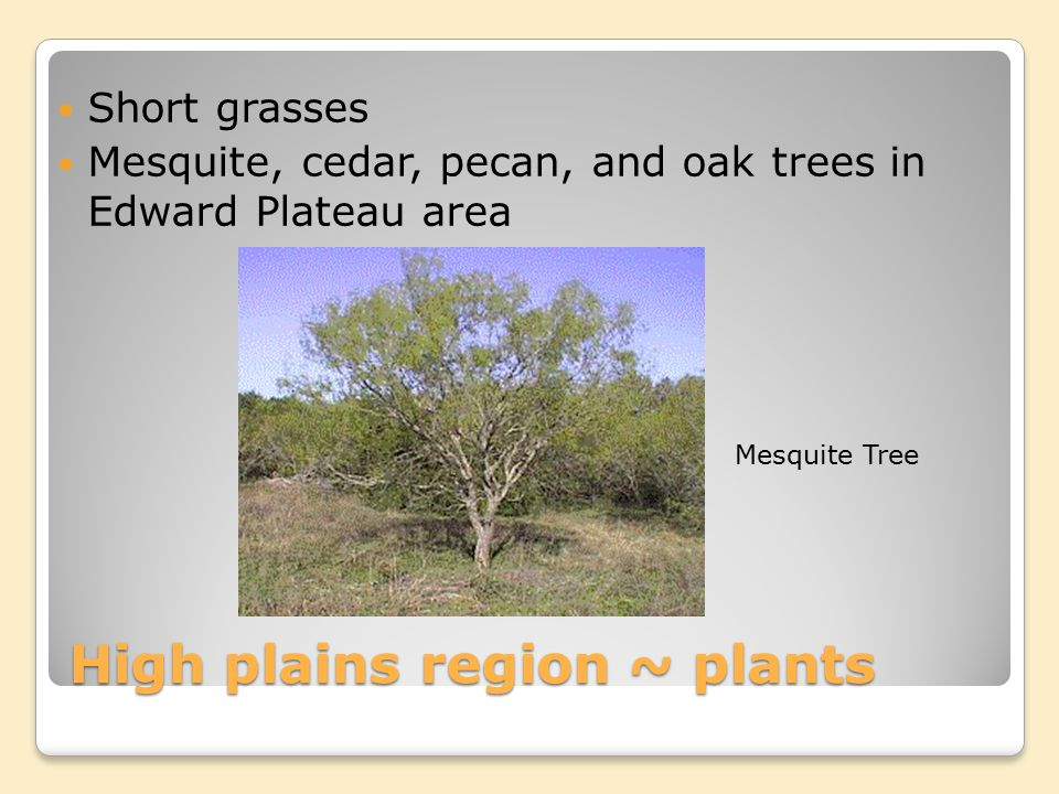 High plains region ~ plants