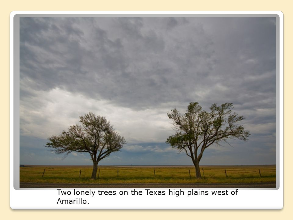 Two lonely trees on the Texas high plains west of Amarillo.