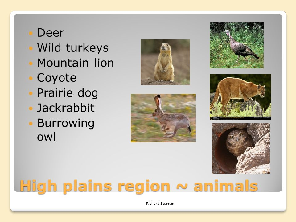 High plains region ~ animals