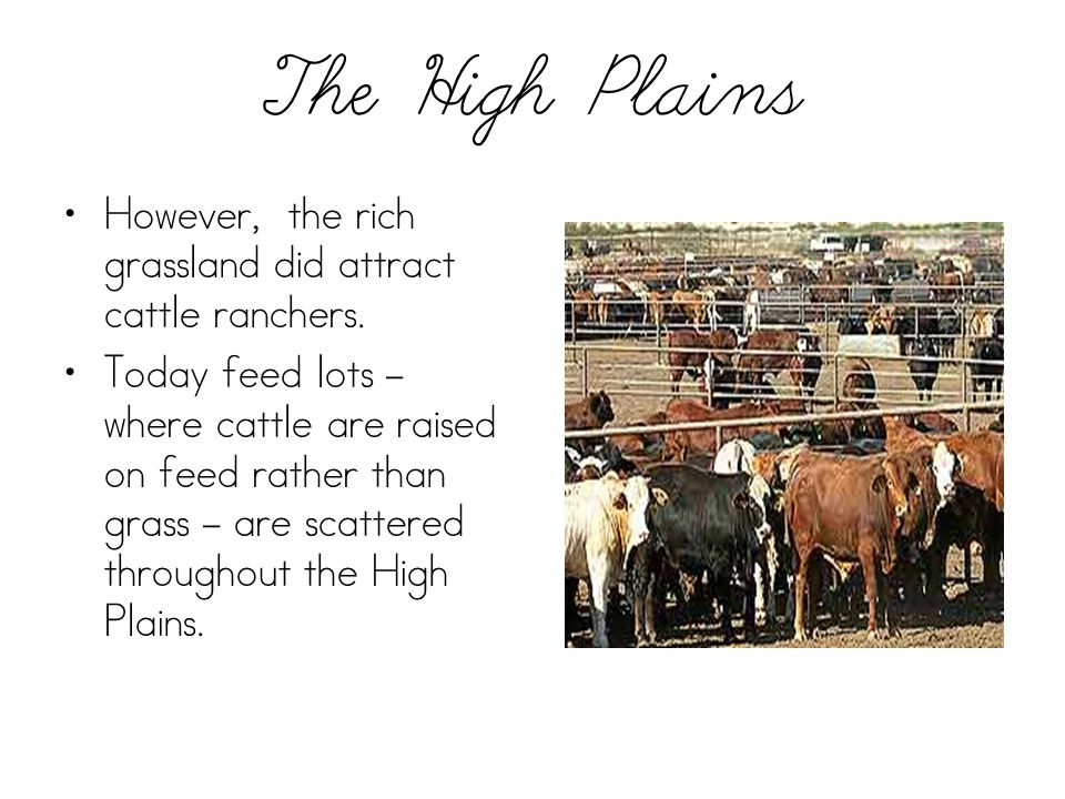 The High Plains However, the rich grassland did attract cattle ranchers.
