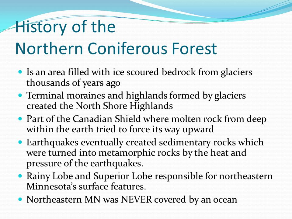 History of the Northern Coniferous Forest