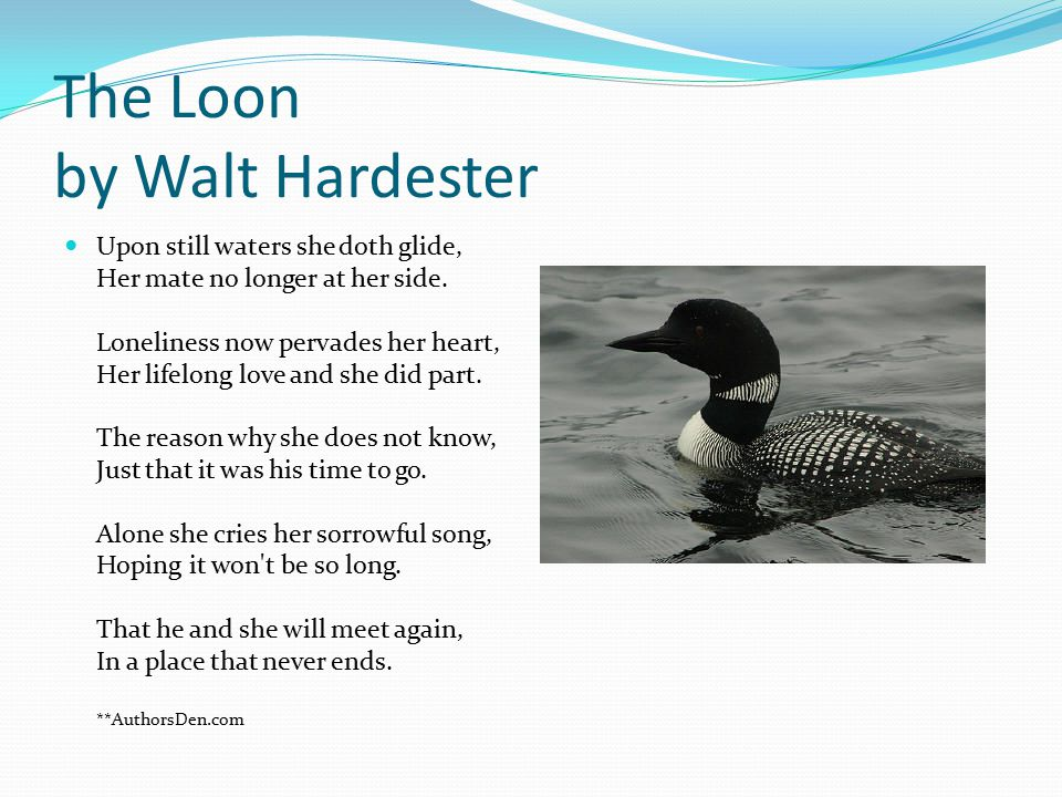 The Loon by Walt Hardester