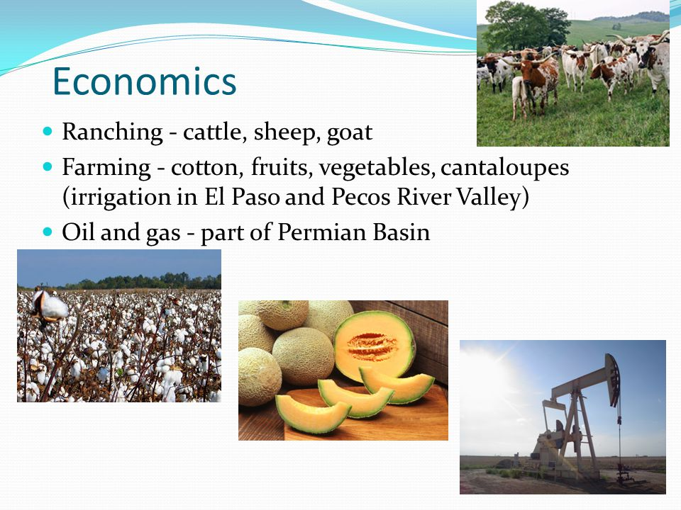 Economics Ranching - cattle, sheep, goat