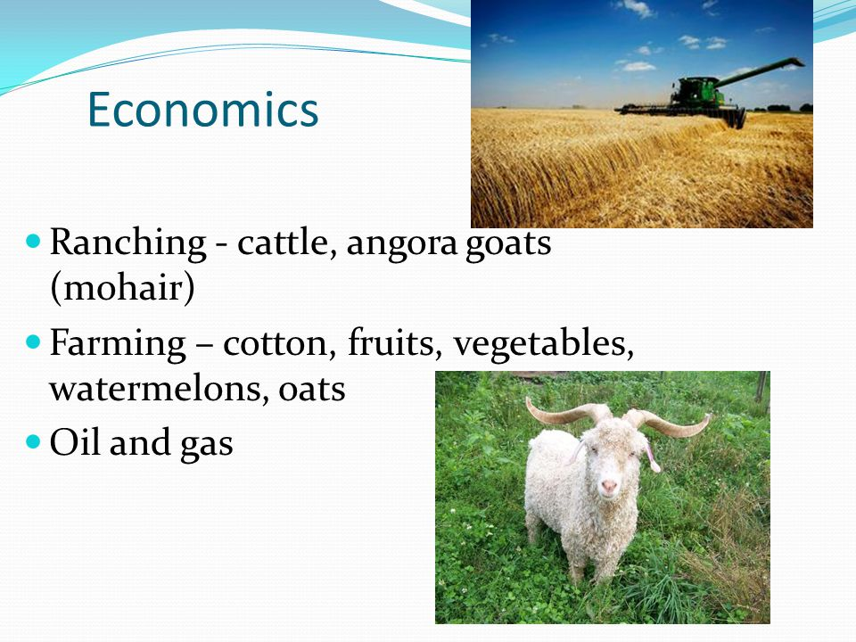 Economics Ranching - cattle, angora goats (mohair)