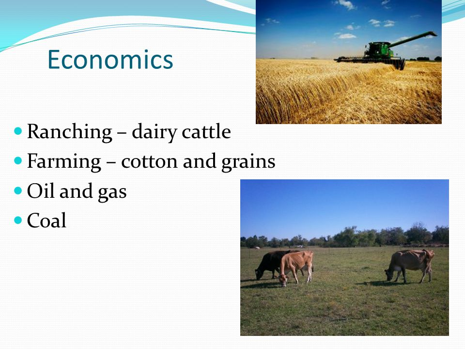 Economics Ranching – dairy cattle Farming – cotton and grains