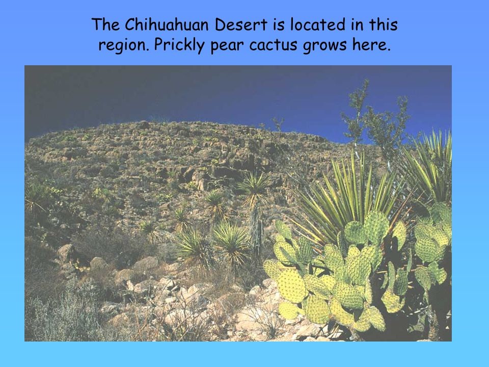 The Chihuahuan Desert is located in this region