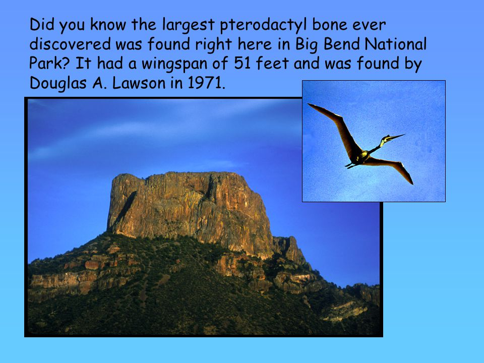 Did you know the largest pterodactyl bone ever discovered was found right here in Big Bend National Park.