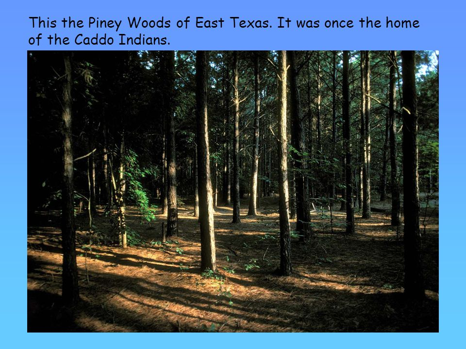 This the Piney Woods of East Texas