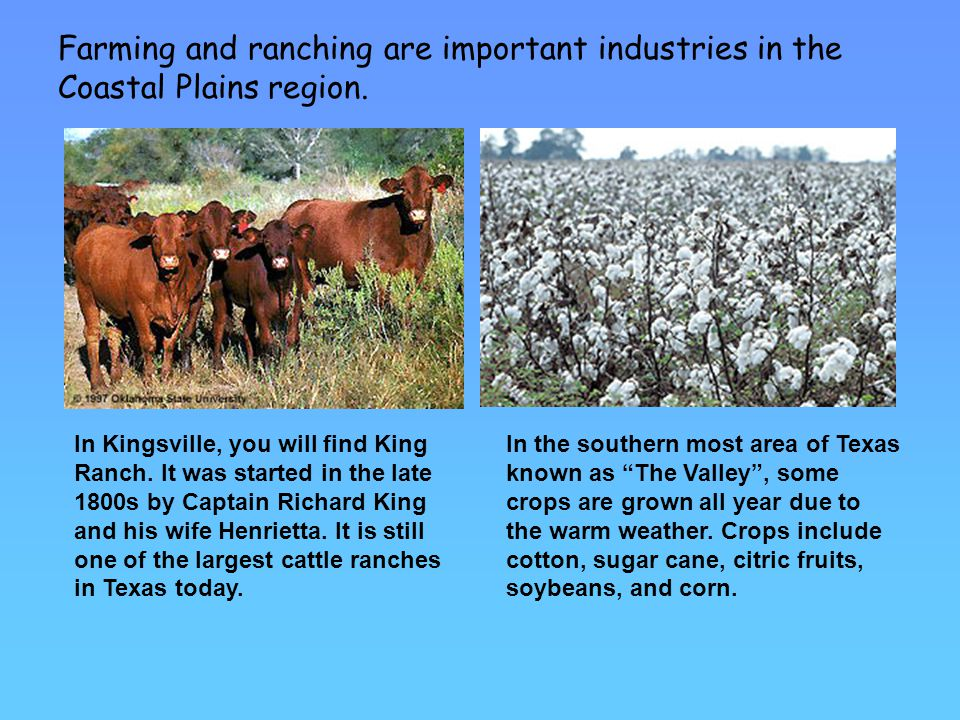 Farming and ranching are important industries in the Coastal Plains region.