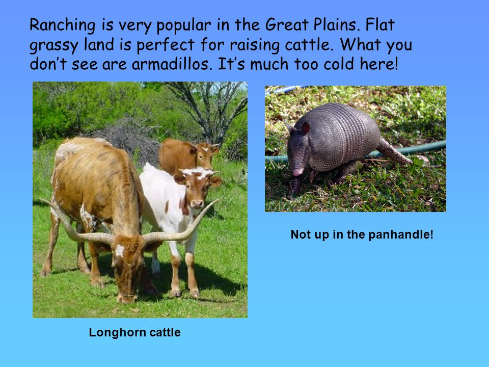 Ranching is very popular in the Great Plains