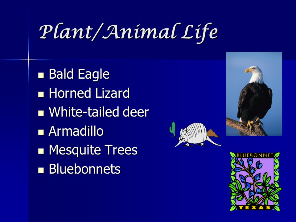 Plant/Animal Life Bald Eagle Horned Lizard White-tailed deer Armadillo