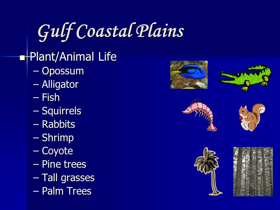 Gulf Coastal Plains Plant/Animal Life Opossum Alligator Fish Squirrels