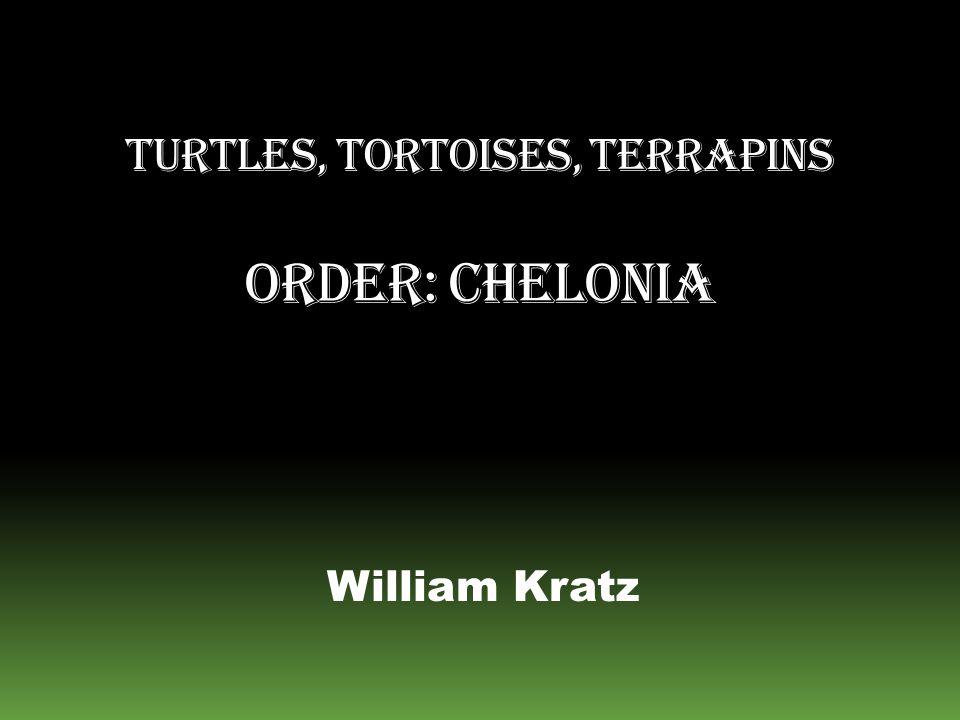 Turtles, Tortoises, Terrapins Order: Chelonia
