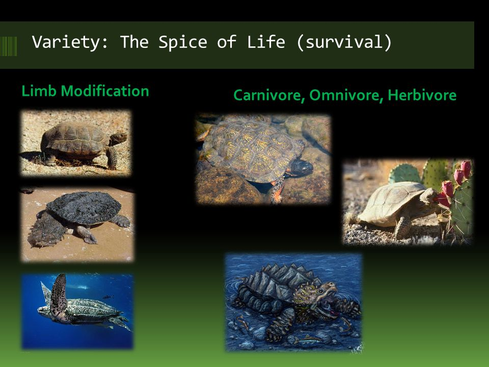 Variety: The Spice of Life (survival)