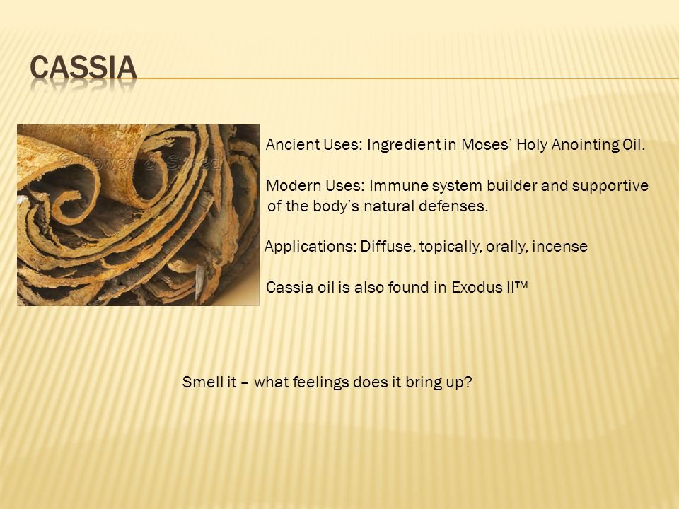 Cassia • Ancient Uses: Ingredient in Moses' Holy Anointing Oil.