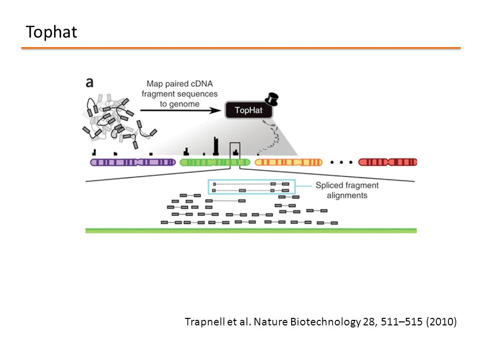 Tophat Trapnell et al. Nature Biotechnology 28, 511–515 (2010)