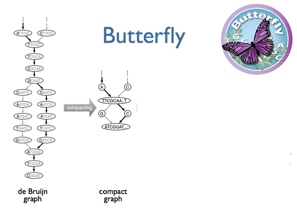 Butterfly operates on each of these graphs independently.