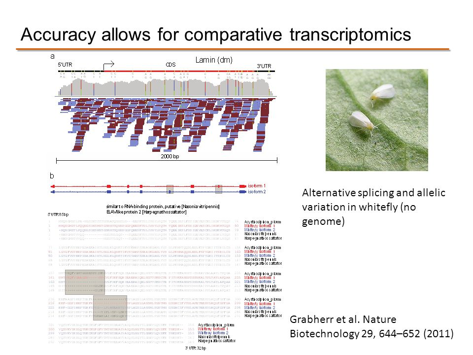 Accuracy allows for comparative transcriptomics