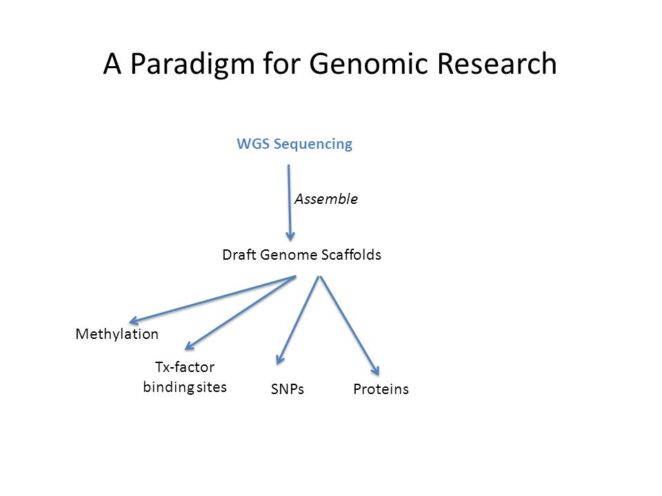 A Paradigm for Genomic Research