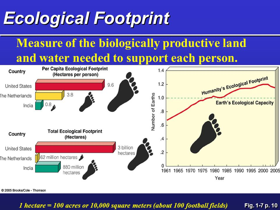 Ecological Footprint Measure of the biologically productive land and water needed to support each person.