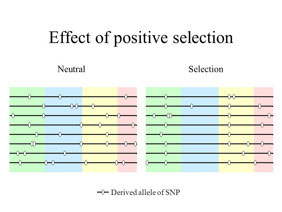 Effect of positive selection