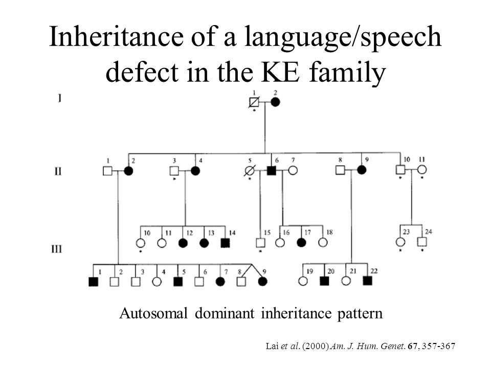 Inheritance of a language/speech defect in the KE family