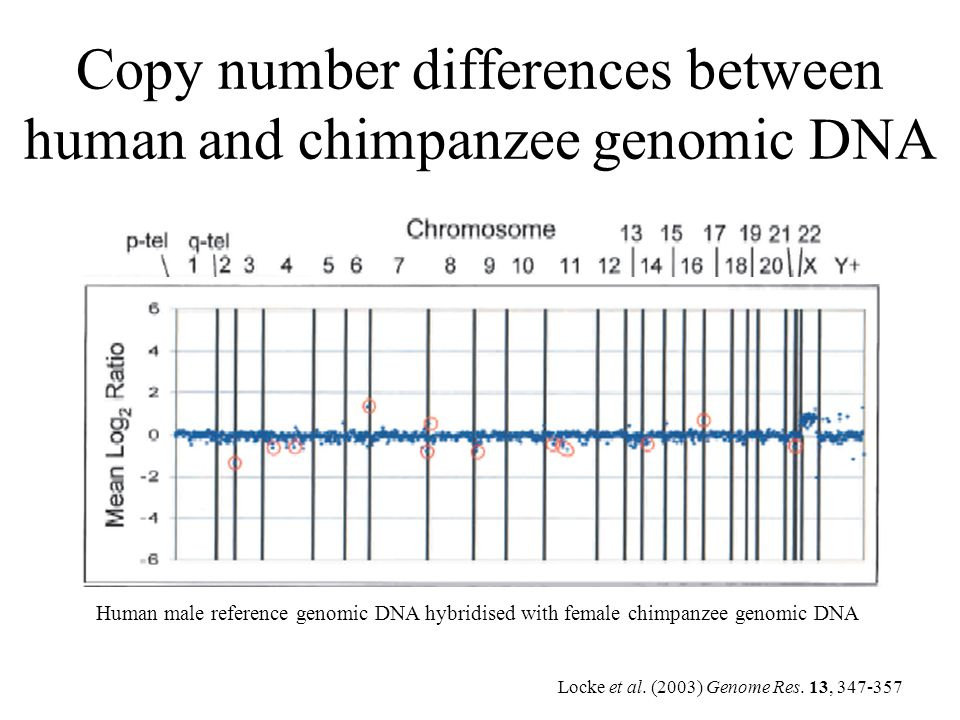 Copy number differences between human and chimpanzee genomic DNA