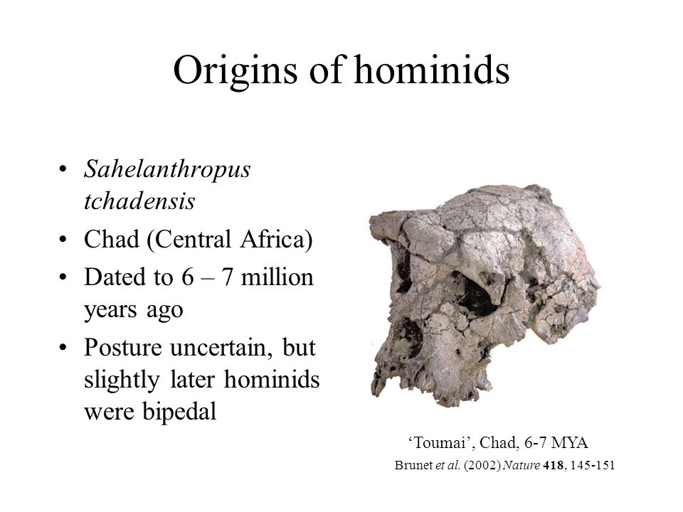 Origins of hominids Sahelanthropus tchadensis Chad (Central Africa)