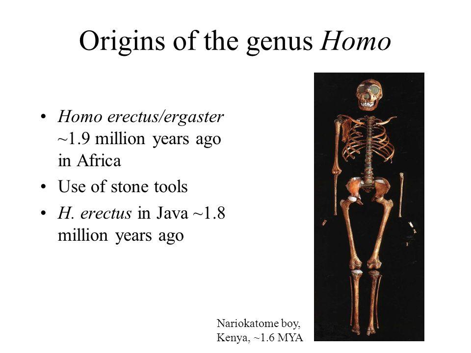 Origins of the genus Homo