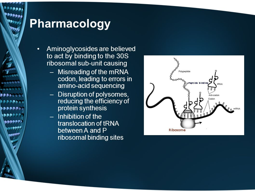 Pharmacology Aminoglycosides are believed to act by binding to the 30S ribosomal sub-unit causing.