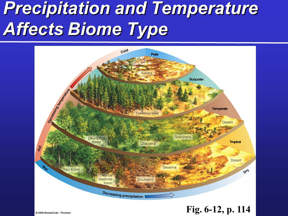 Precipitation and Temperature Affects Biome Type