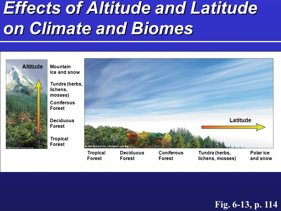 Effects of Altitude and Latitude on Climate and Biomes