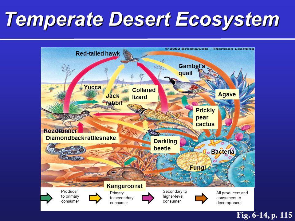 Temperate Desert Ecosystem