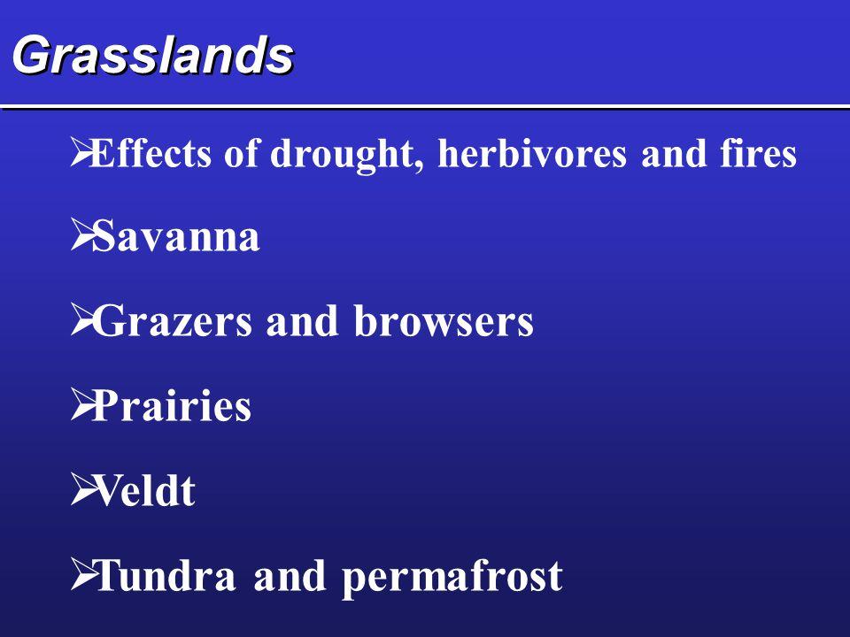Grasslands Savanna Grazers and browsers Prairies Veldt