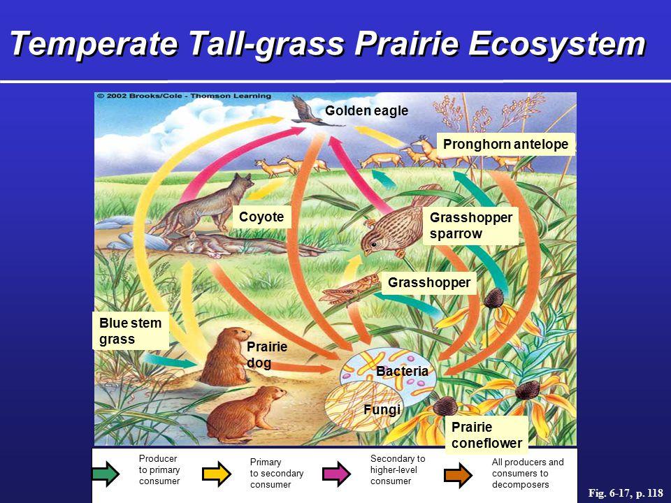 Temperate Tall-grass Prairie Ecosystem