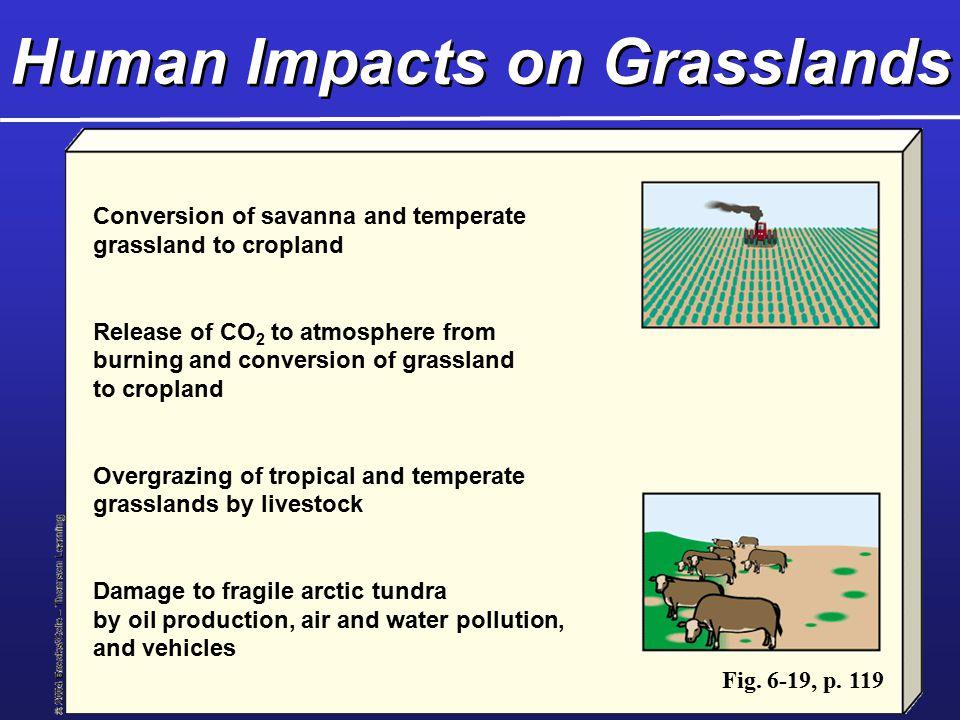 Human Impacts on Grasslands