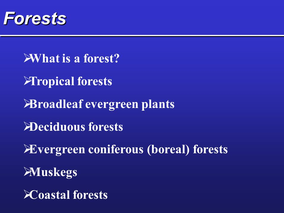 Forests What is a forest Tropical forests Broadleaf evergreen plants