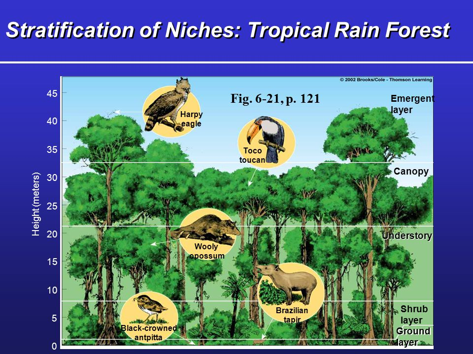 Stratification of Niches: Tropical Rain Forest
