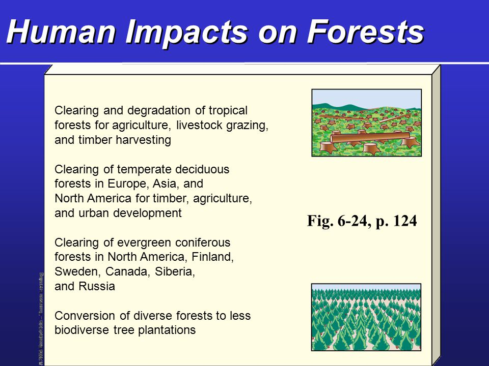 Human Impacts on Forests