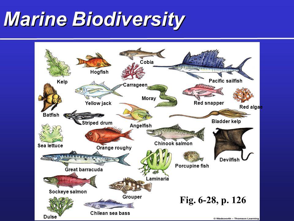Marine Biodiversity Fig. 6-28, p. 126 Cobia Hogfish Kelp