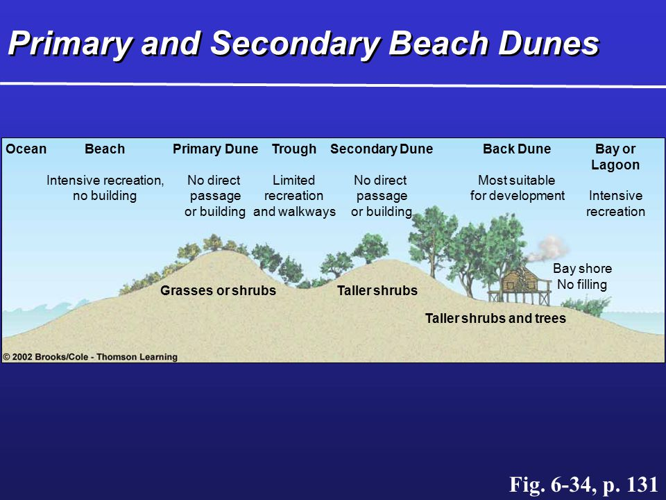 Primary and Secondary Beach Dunes